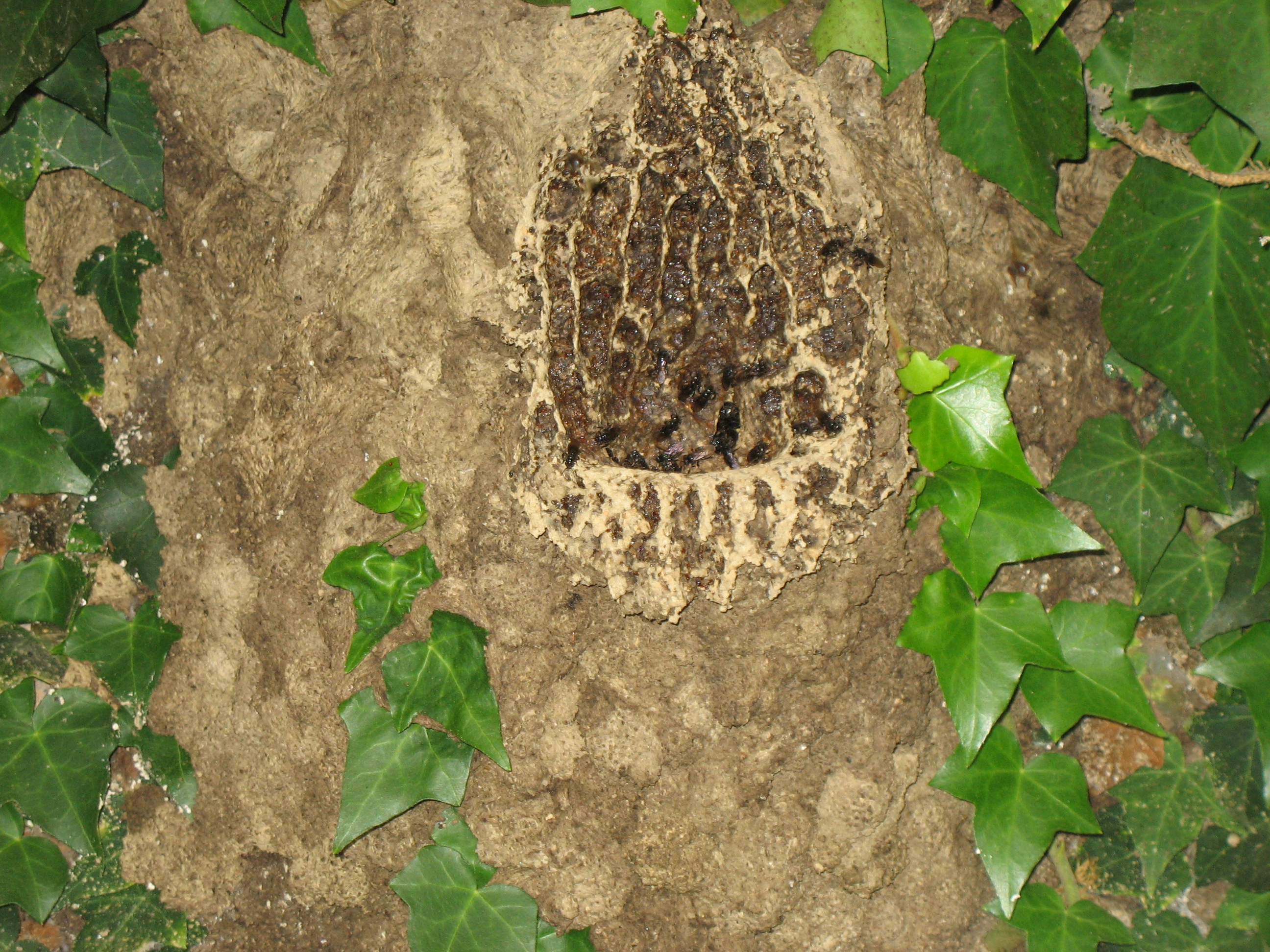 Nid d 39 abeilles les taxinomes - Nid d abeille castorama ...
