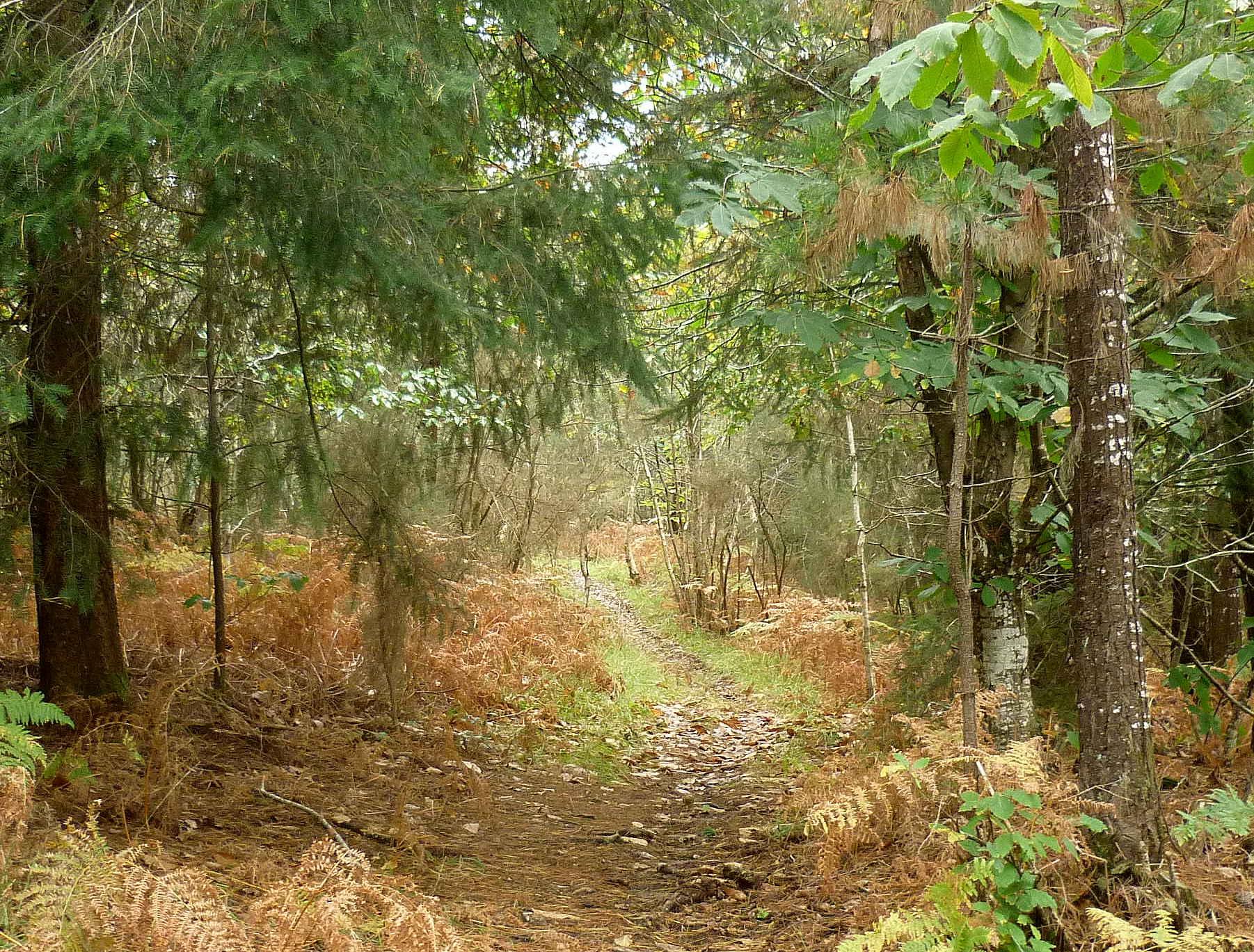 Sous bois breton en automne les taxinomes - Sous bassement en bois ...