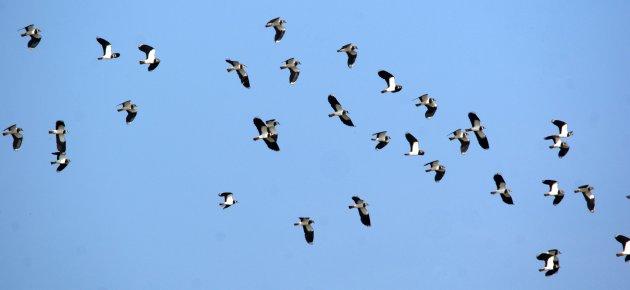 Qui saurait de quel oiseau il s'agit? DSC01904_1-9291b